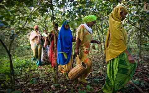 Africasiaeuro coffee page Arabica Robusta coffee Ethiopia